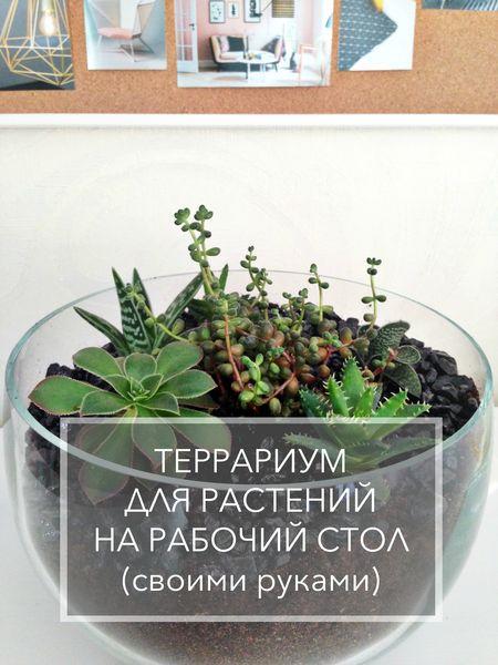 Terrarium-dlya-rastenii-svoimi-rukami