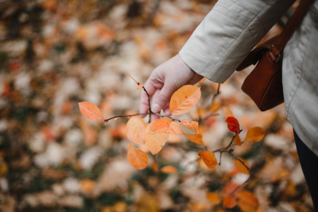 Осенний плейлист