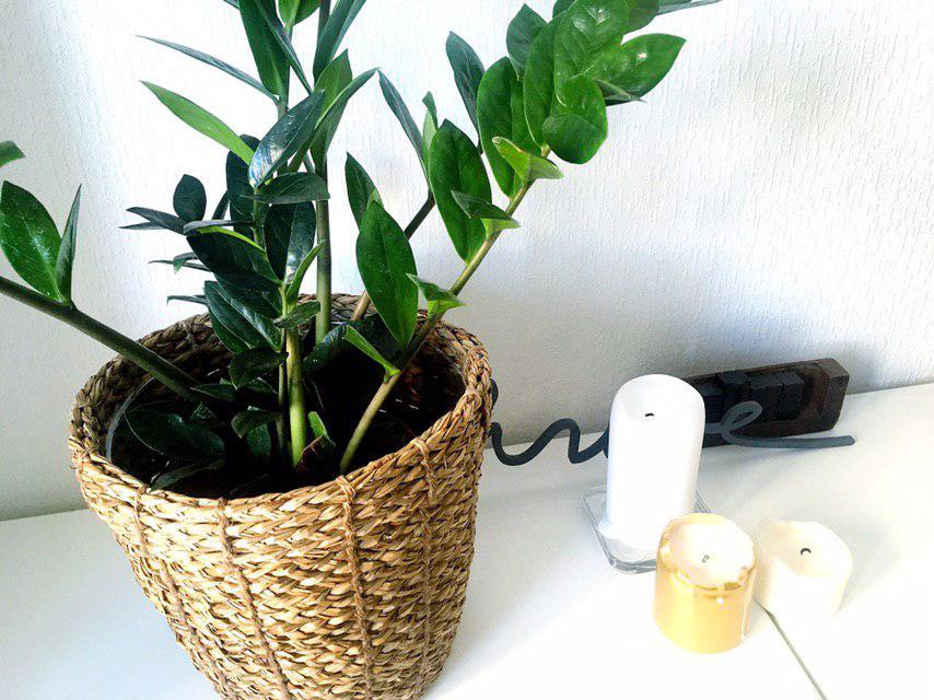 Украшение дома растениями | Блог Варвары Лялягиной «Дом, в который хочется приходить»