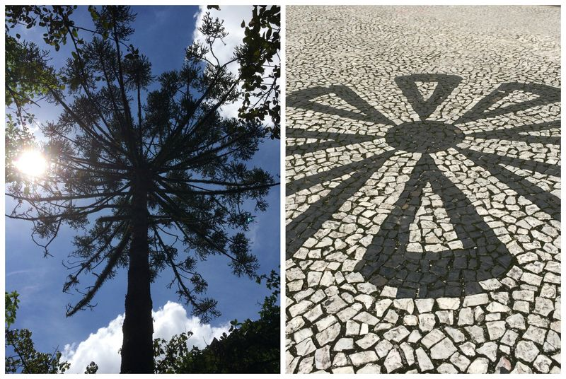 Curitiba-pines